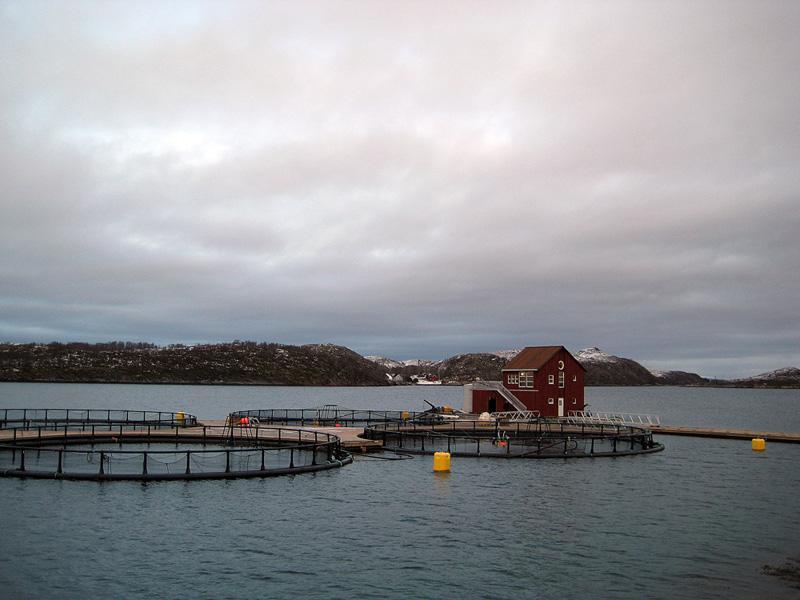 Regjeringen vil utrede grunnrenteskatt på havbruk