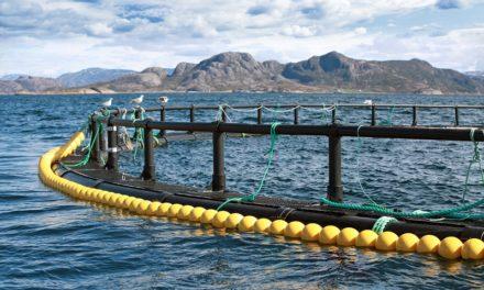Auksjon på nye akvakulturtillatelser