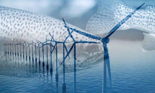 Laks og ørret på landstrøm kan kutte 360.000 tonn CO2