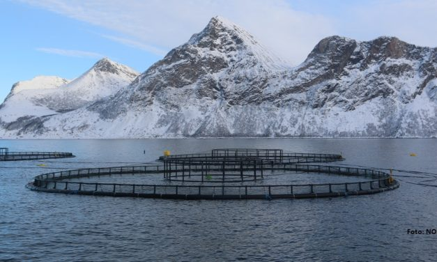 Sjømatnæringen vil ha arealleie for oppdrett
