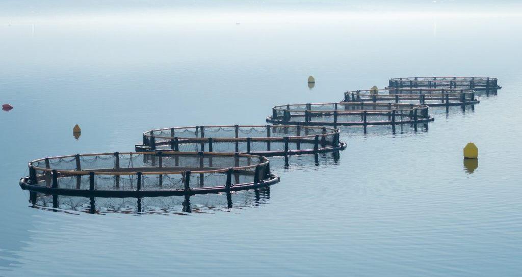 Havbruksfondet – ny avklaring fra Fiskeridirektoratet