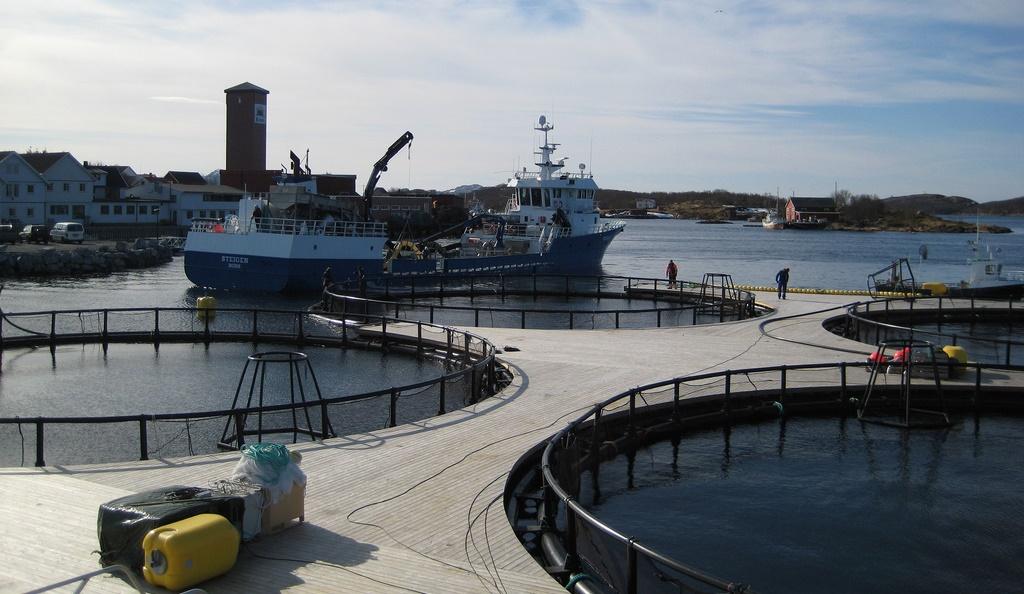 Retten til å drive havbruk i felles allmenning bør tidsbegrenses