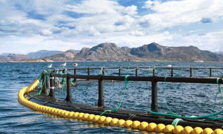 NFKKs høringsuttalelse på NOU 2019:18 Skattlegging av havbruksvirksomhet