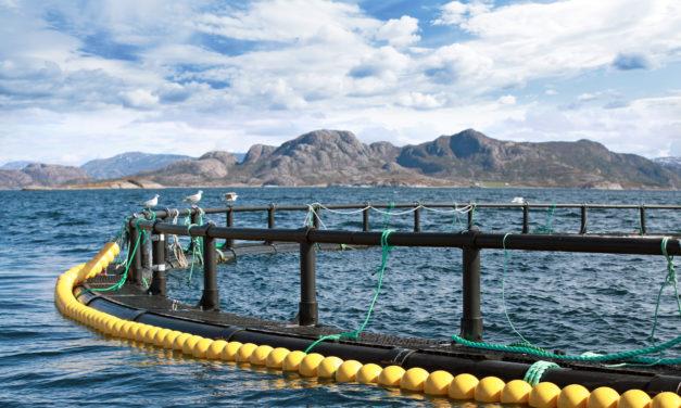 Havbruksnæringens utvikling er avgjørende for fremtiden til kystsamfunnene