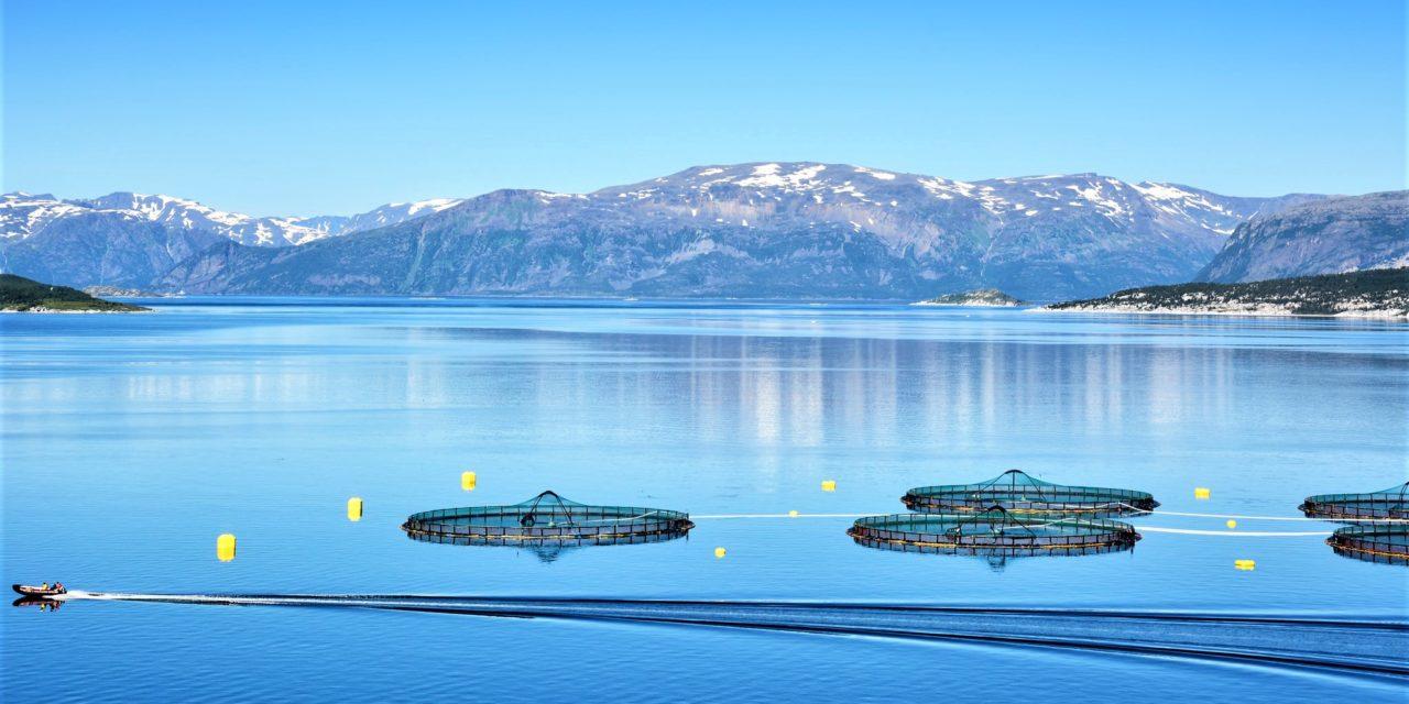 Akvakulturarealene skal fastsettes i kommunene – ikke fylkeskommunene